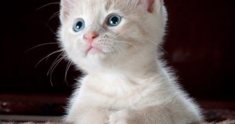 Распространенные болезни у котят